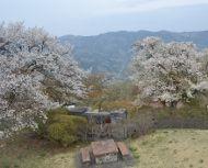 蓑山_山桜と秩父連山0037Ed