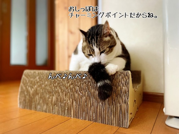 IMG_6203