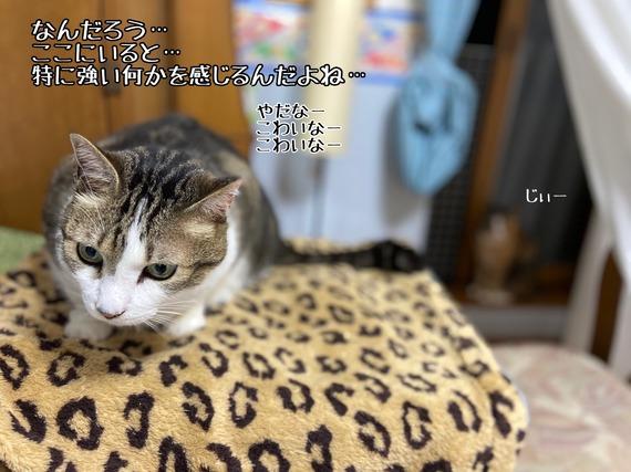 IMG_5140