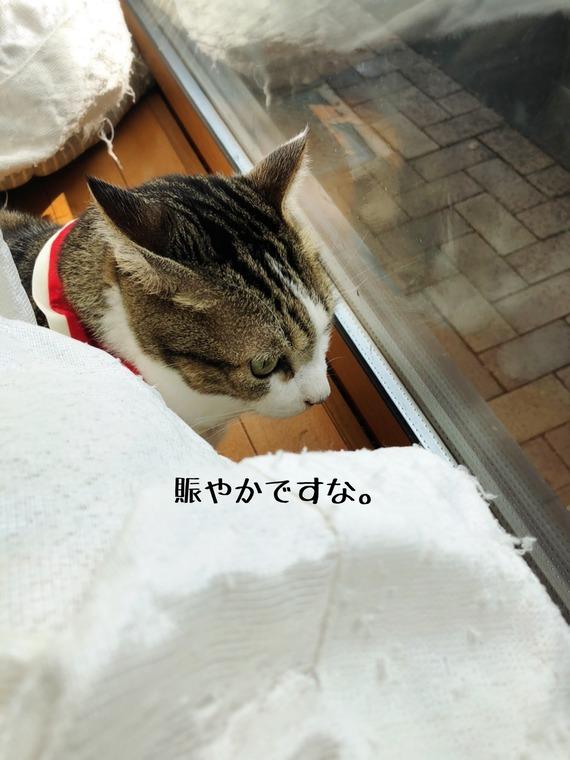IMG_0047