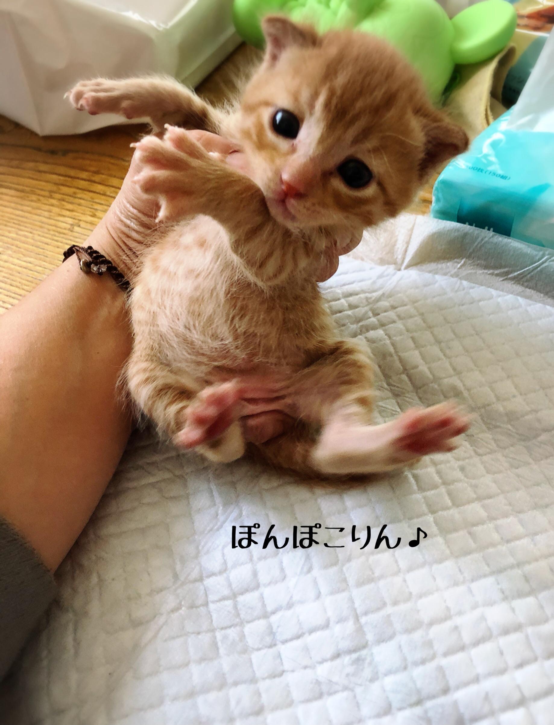 しない 猫 うんち