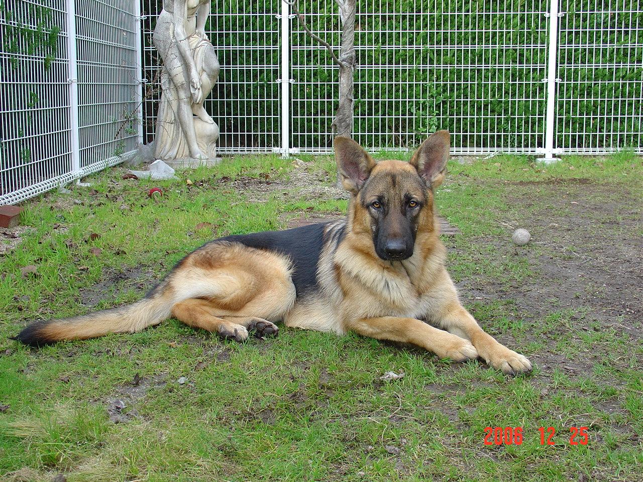 犬の画像 p1_30