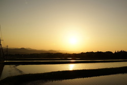 伯耆町代かき田に映る夕日