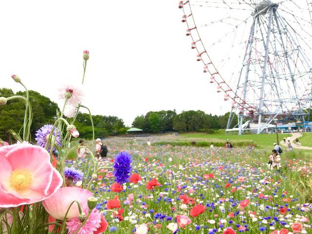 花畑で花摘み♡