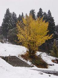 黄葉と雪景色