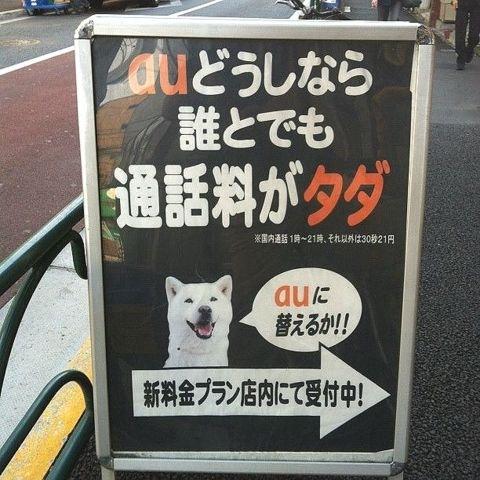 auが広告に犬を使う(拡大表示)