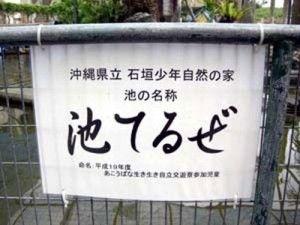 沖縄の池(拡大表示)