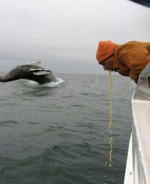 クジラを取ろうとしたら変なモノが撮れた(拡大表示)