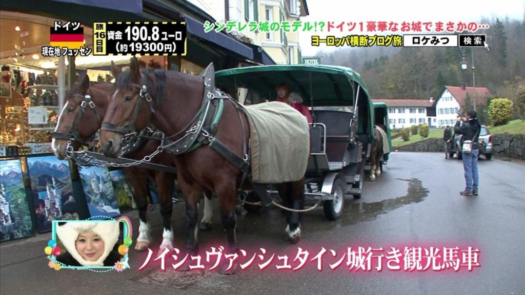 観光馬車の馬(拡大表示)