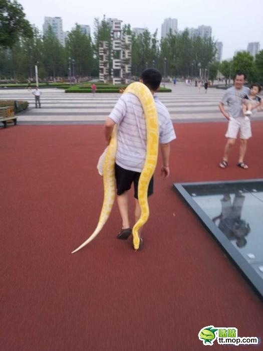 ヘビの散歩3(拡大表示)