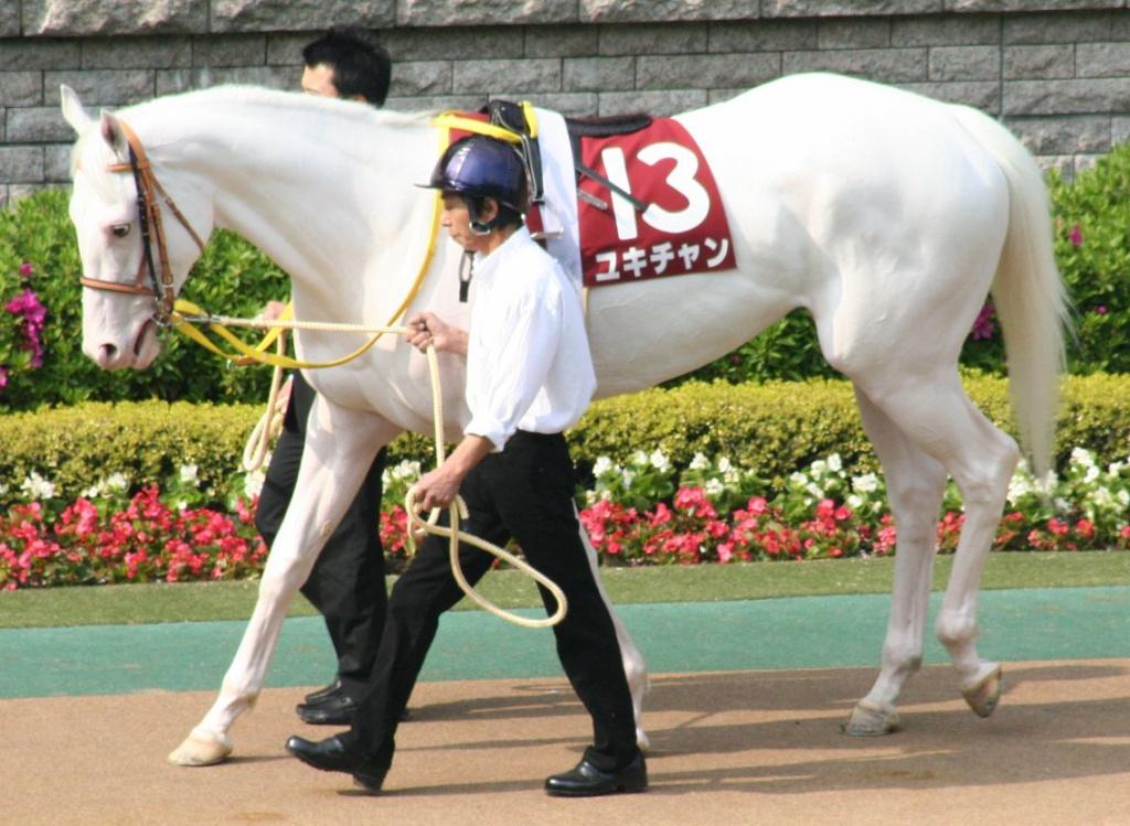 白馬はキレイ(拡大表示)