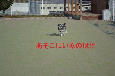 DSC_0365