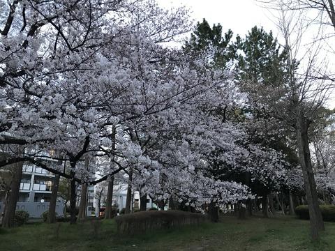 写真 2019-04-01 18 17 15