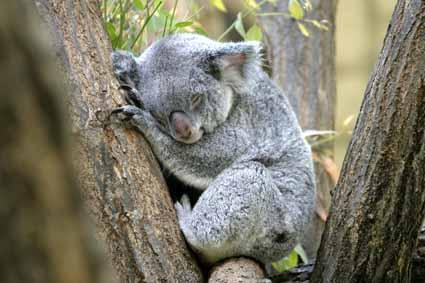 動物の睡眠時間ってどのくらい?  舘祐司の気ままなブログ