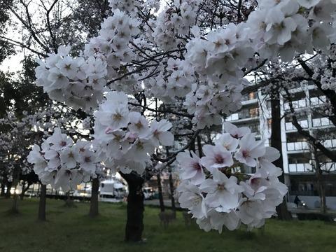 写真 2019-04-01 18 17 38