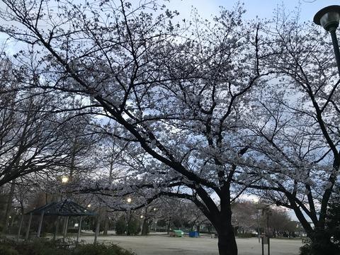 写真 2019-04-01 18 16 11