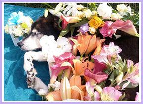 バンビとお花(2)