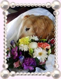 ロンちゃんとお花