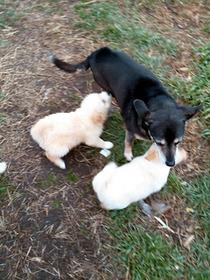 ジョリーと子犬2