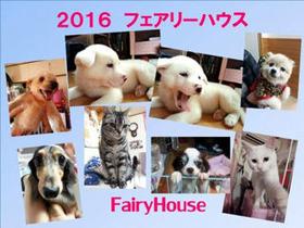フェアリーハウスカレンダー