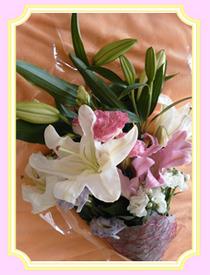 くまこのお花3