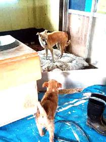 子犬保護4