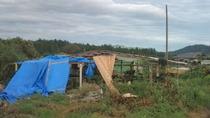 コロたちの屋根、台風9,17,25