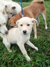新子犬(3)9,17,27