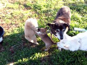 ジョリーと子犬4