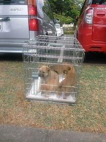 公園子犬(1)5,5,27