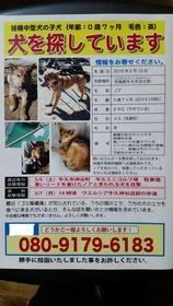 3,13,28ノアちゃんポスター