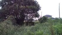 草刈りの反対側、9,7,25