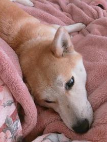 1月1日・保護犬・・・一子(いちこ)さん(3)28、