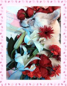 サクラとお花2