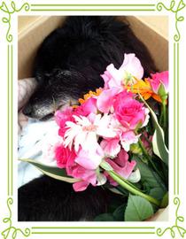 くまことお花