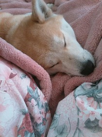 1月1日・保護犬・・・一子(いちこ)さん(2)28、