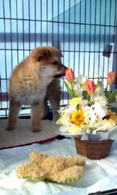 ルッ子とお花1