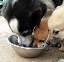 子犬とクミ1
