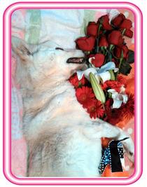 サクラとお花1