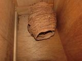 15蜂の巣1
