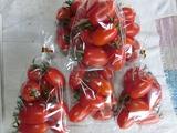 20ミニトマト2