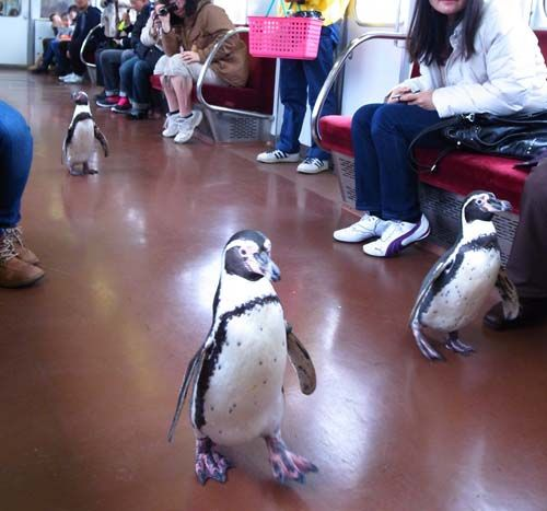 ペンギン列車1