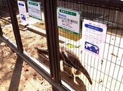 王子動物園4