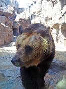 王子動物園2