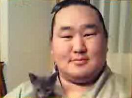 朝青龍のネコ