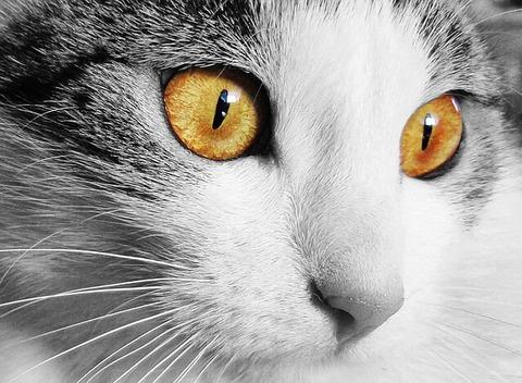 cat-520894_640