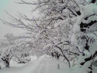 雪_081228_1
