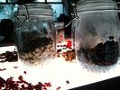 発酵する納豆たち