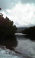 マングローブの林を船で行く