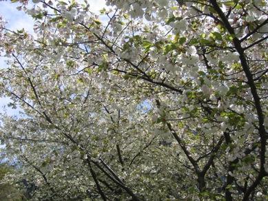 ボタニカル桜6